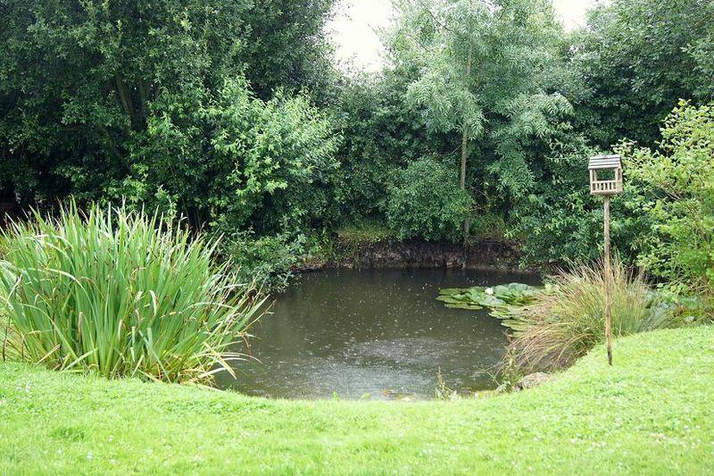 Pond 16.07.11