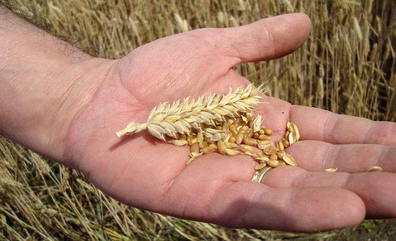 31.07.11 corn