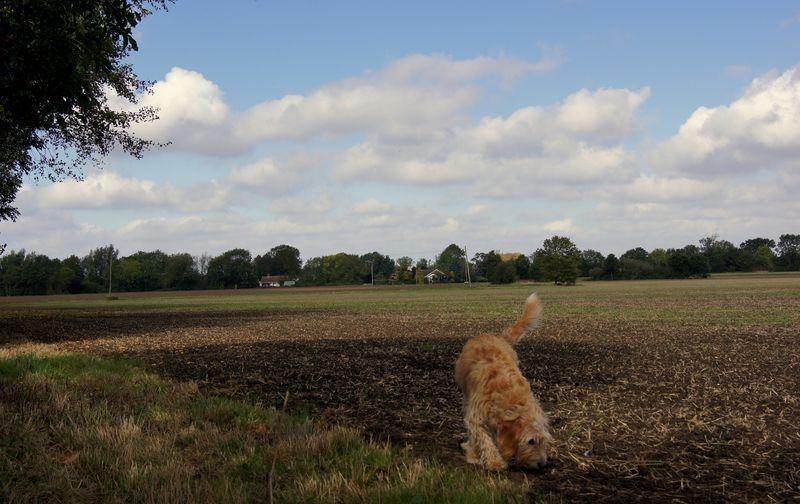 Fred in field