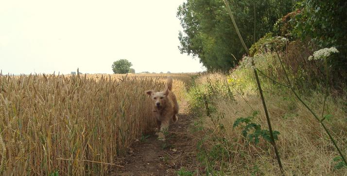 31.07.11 fred running