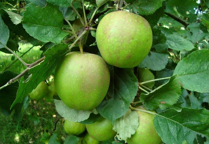 31.07.11russets